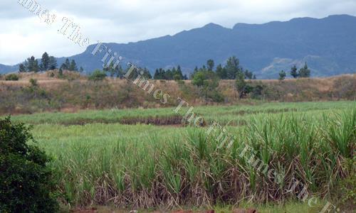 A sugarcane farm in Lautoka. Picture: File