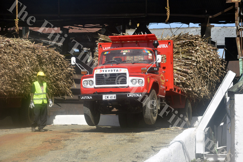 Truck driver Nand Kumar unloads the sugar cane at the lautoka Mill yesterday. Picture: REINAL CHAND